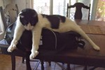 Axl Cat