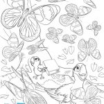 Printable Butterfly Coloring Sheet