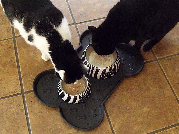 Loving Pets Feeding Supplies & Against the Grain Pet Food