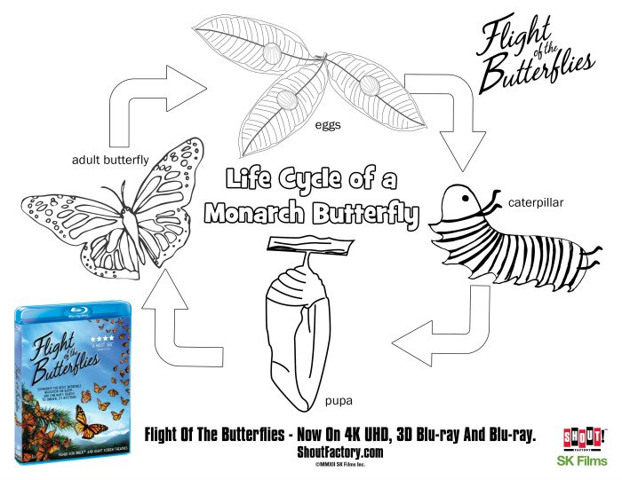 life cycle of a butterfly coloring page mama likes this