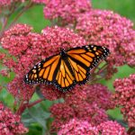 IMAX Flight of The Butterflies Blu-ray