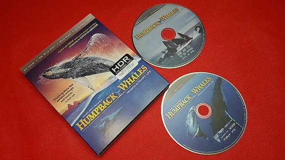 IMAX Humpback Whales