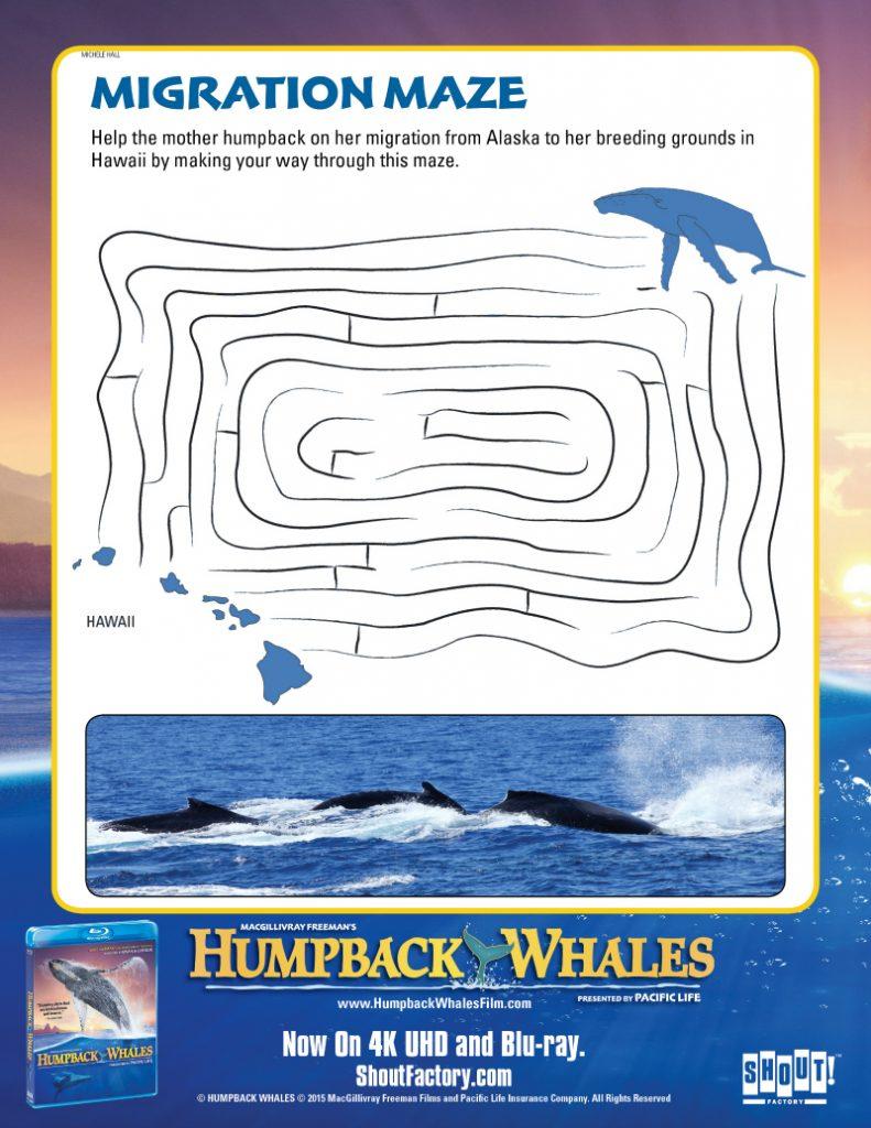 Free Printable Humpback Whales Maze