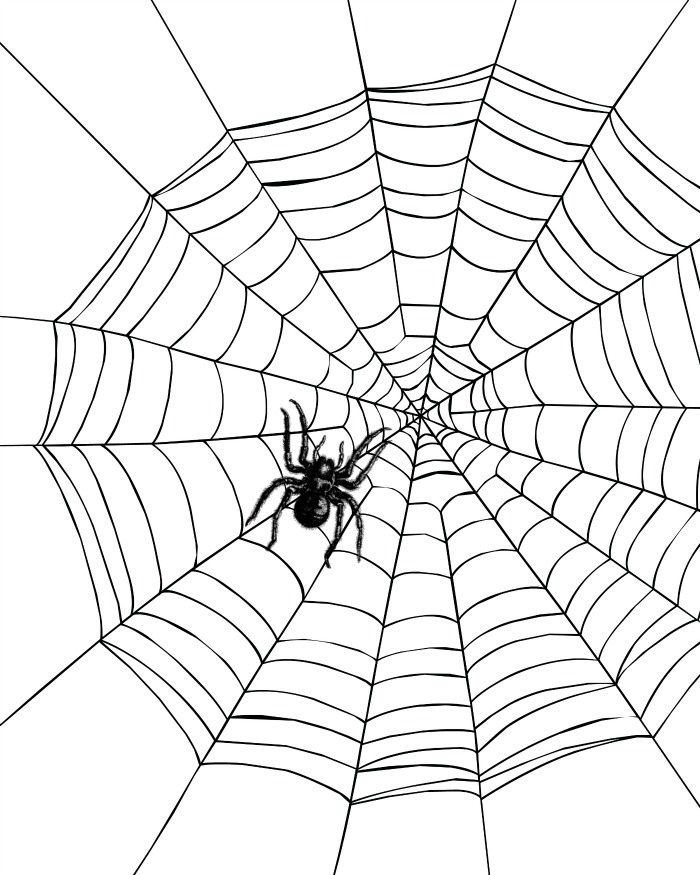 Spider in a Spiderweb Printable Coloring Page | Mama Likes ...