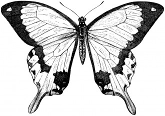 Free Printable Beautiful Butterfly Coloring Page