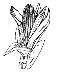 Corn on The Cob Coloring Page
