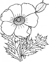 Free Printable Garden Flower Coloring Page