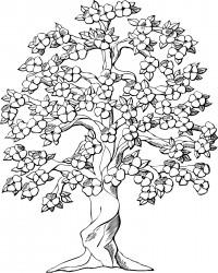 Plumeria Flowering Tree Coloring Page