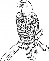 Patriotic Eagle Coloring Page