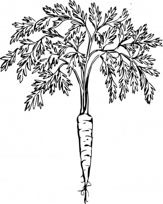 Free Printable Carrot Coloring Page