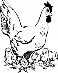 Printable Hen and Chicks Coloring Page