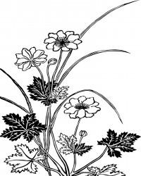Vintage Flowers Coloring Page