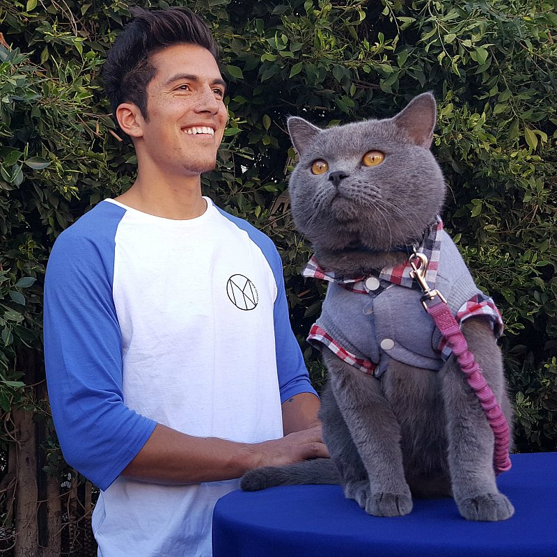 InstaCat Prince Michael of Aarons Animals