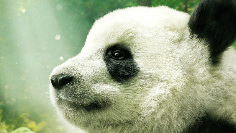 Pandas IMAX
