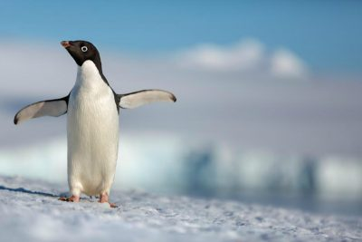 Disneynature Penguins Official Video Trailer