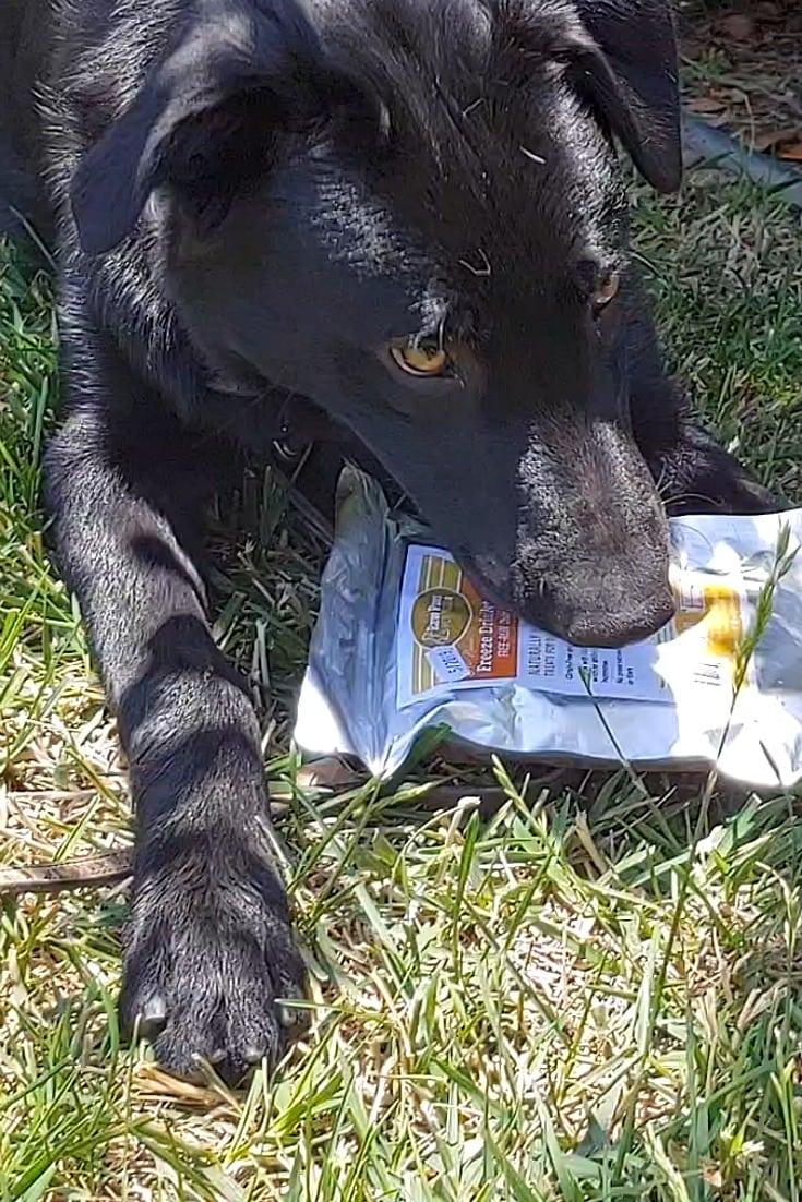 raw paws freeze dried dog treats