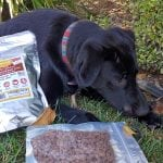 Freeze Dried Dog Treats Your Pets Will Love