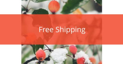 Free Shipping Holiday Background