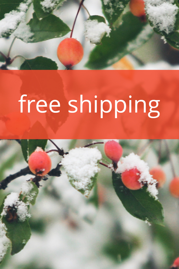 pin free shipping holiday background
