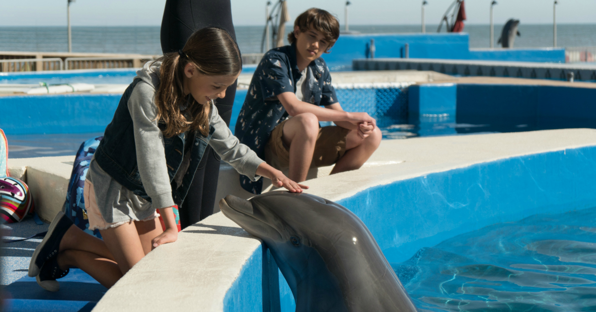 1 bernie the dolphin