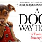 A Dog's Way Home In Theaters Now