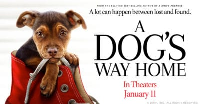 feature dogs way home