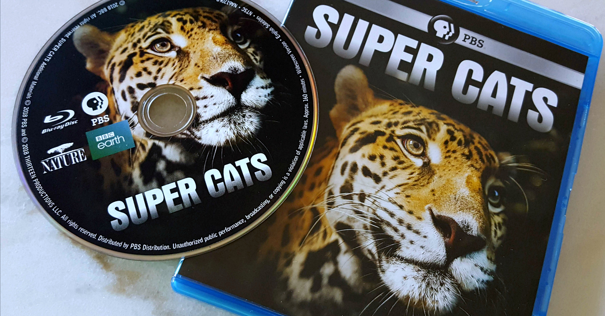 feature pbs super cats