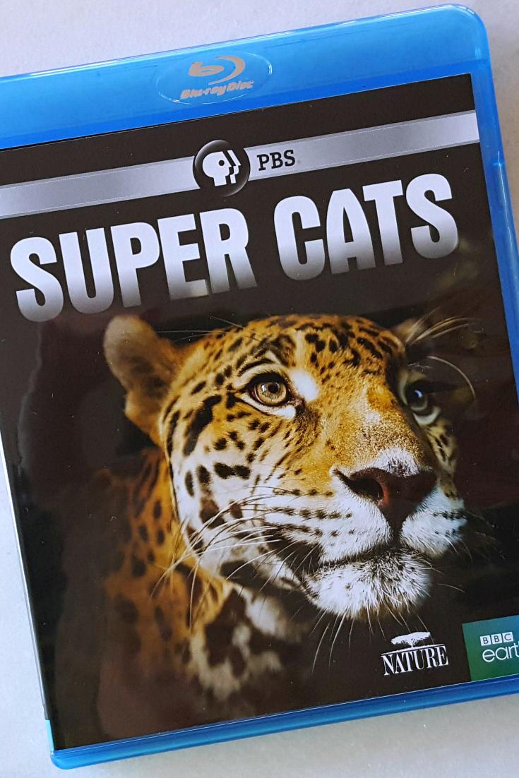 pin pbs super cats