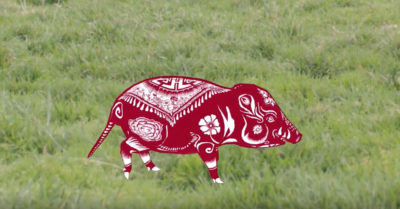 feature krikey year of the pig