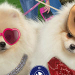 Puppy Swap DVD Giveaway – 5 Winners – Ends 8/4/19