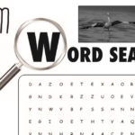 Storm Boy Word Search Activity Page