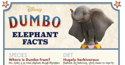 dumbo fun facts