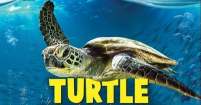 turtle odyssey movie