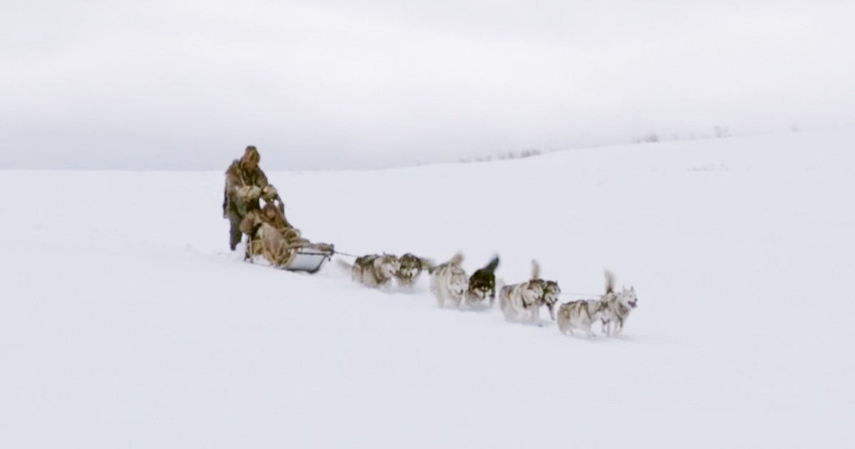 feature the great alaskan race sled dogs