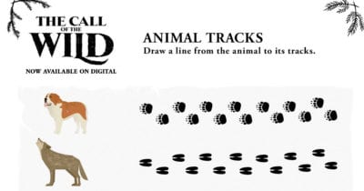 feature animal tracks activity page