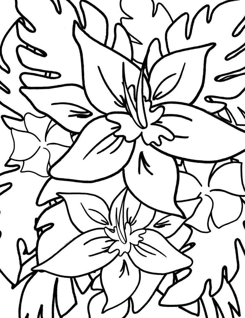 full size tropical flowers coloring page