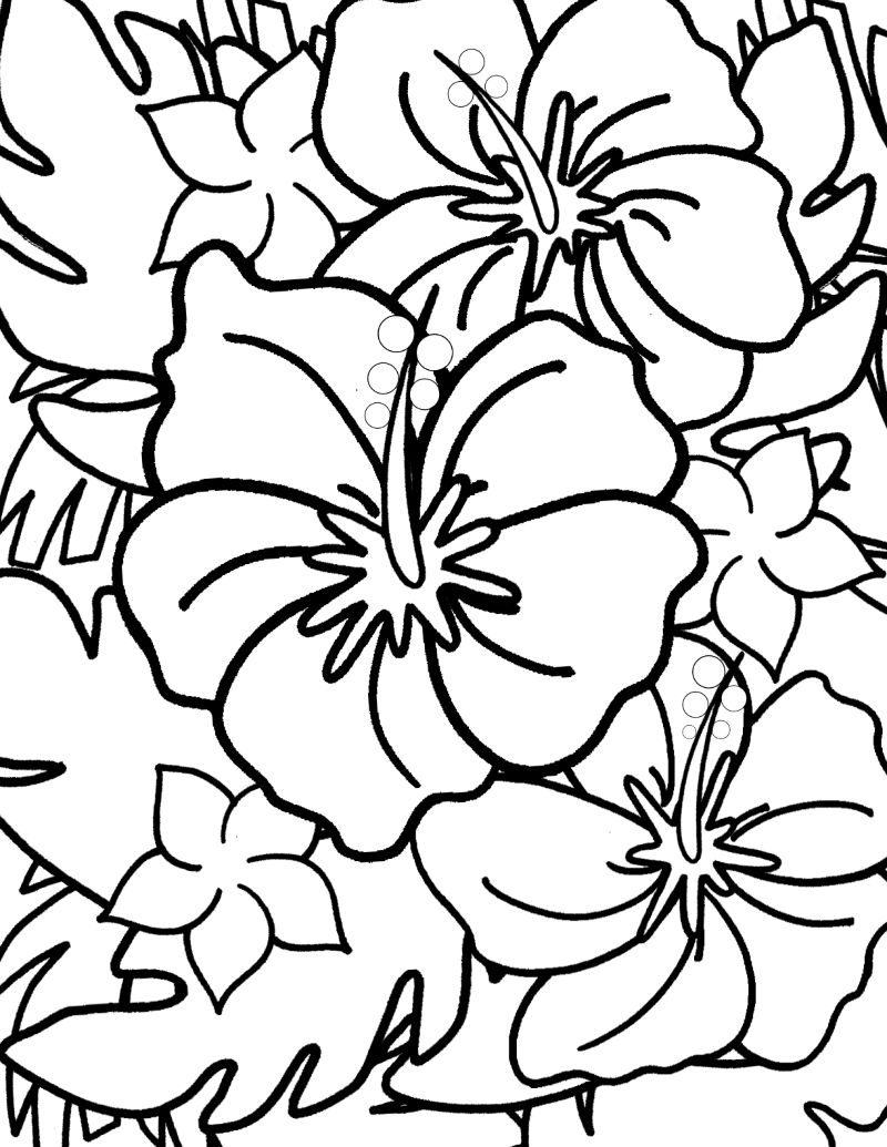 pin hibiscus coloring page