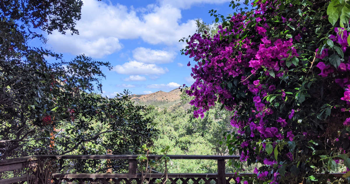 feature bougainvillea and mountain view