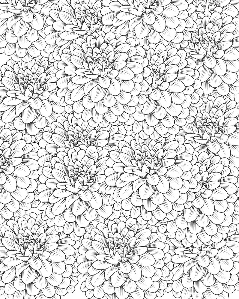Chrysanthemum Coloring Page for Adults and Kids #Chrysanthemum #Mums #FreePrintable #FlowerColoringPage #FloralColoringPage