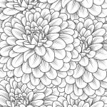 Chrysanthemum Coloring Page for Adults and Kids