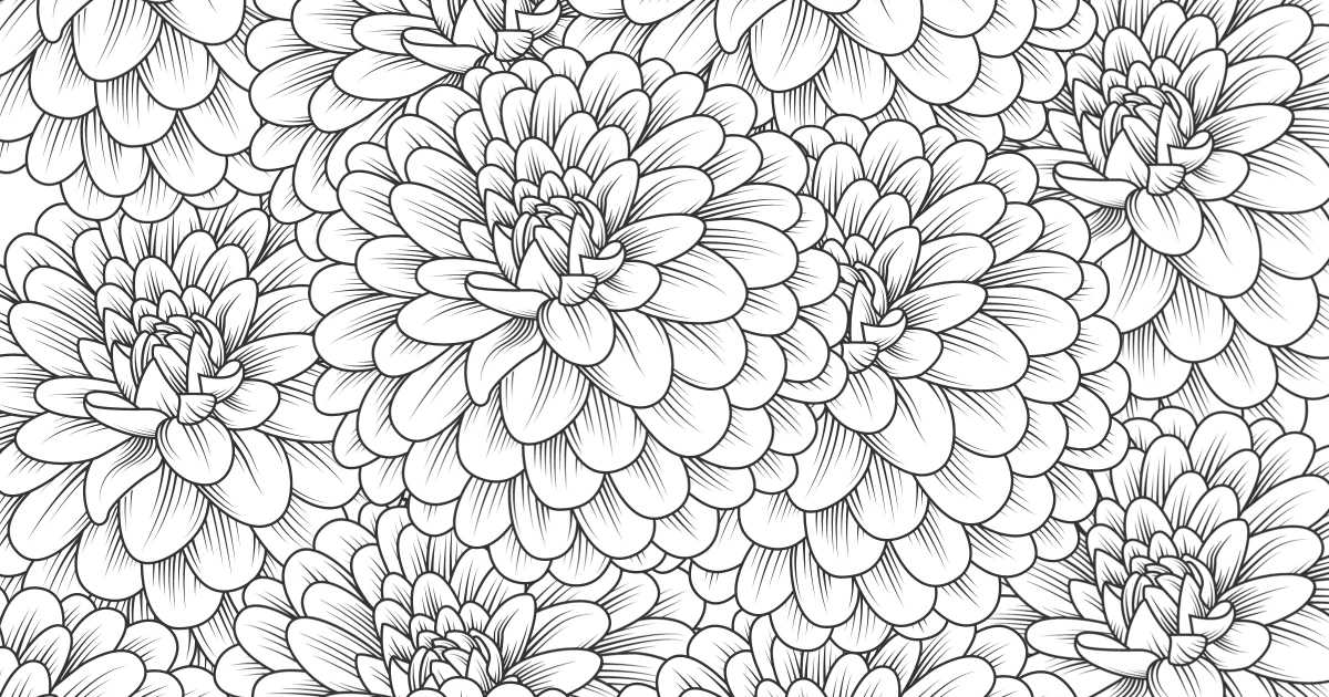 feature chrysanthemum coloring page