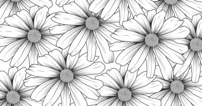 feature daisy coloring page