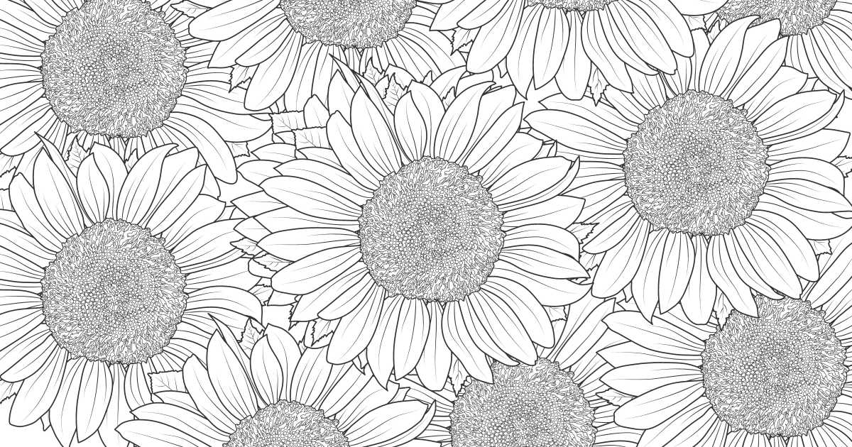feature sunflower coloring page