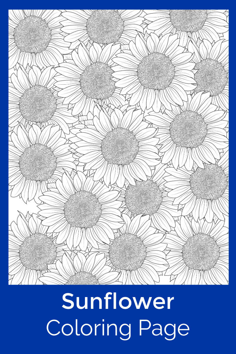 Free Printable Sunflower Coloring Page #FreePrintable #Sunflowers #Sunflower #FlowerColoringPage