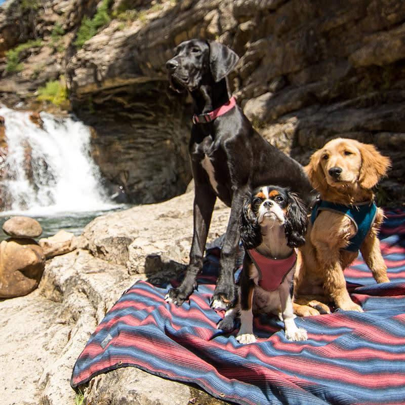 dogs on coalatree blanket