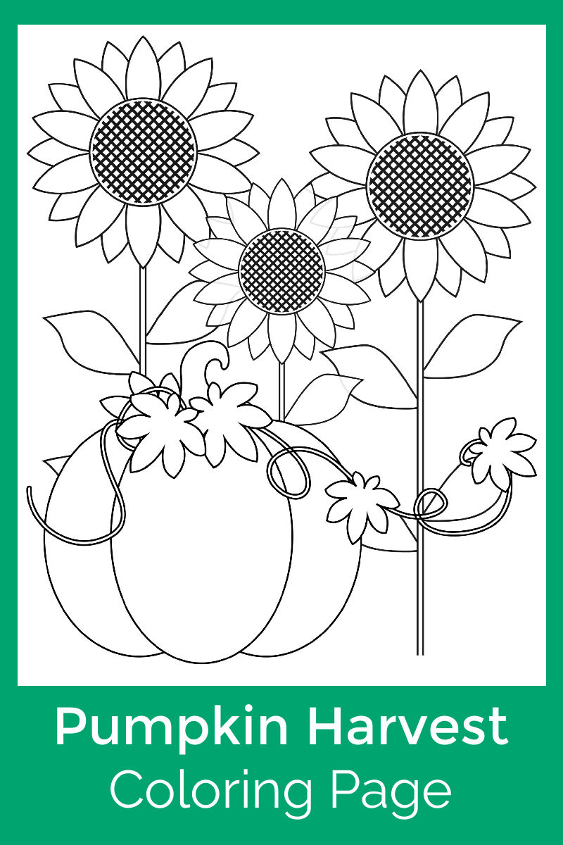 Pumpkin Harvest Coloring Page with sunflowers