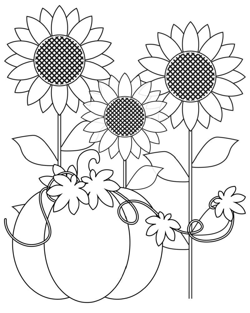 pumpkin sunflower coloring page