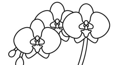 orchid coloring page.