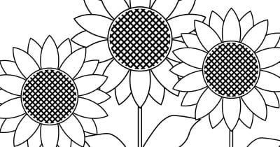 feature sunflower garden coloring page