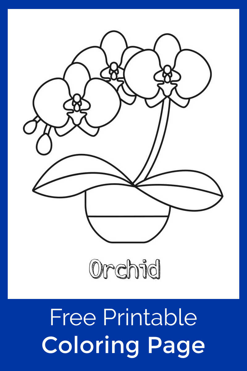 Growing beautiful orchids takes skill, but this pretty printable orchid coloring page is an easy way for kids to make their own flower decor.